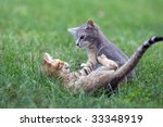 Stock photo two kittens wrestling and playing in the grass 33348919