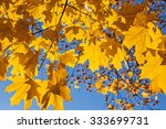 yellow and orange autumn leaves | Shutterstock . vector #333699731