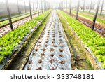 farm of hydroponic plantation | Shutterstock . vector #333748181