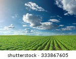 rows of green soybeans against... | Shutterstock . vector #333867605