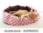Stock photo a ginger kitten sleeps in his soft cozy bed on a white carpet soft focus 333983051