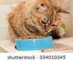 Tabby Cat Eats Dry Cat Food...