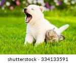 Yawning White Swiss Shepherd S...