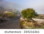 road on through the meadow  forest in foggy mountains in morning light - stock photo