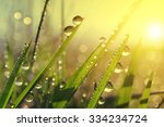 fresh grass with dew drops at... | Shutterstock . vector #334234724