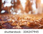 Landscape Autumn Path In The...