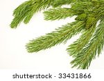 pine branch with cones | Shutterstock . vector #33431866