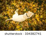 view from above at the yellow... | Shutterstock . vector #334382741