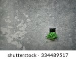 Small photo of Green plant in little hole in the wall - hope concept
