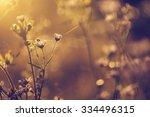 vintage photo of wild flowers... | Shutterstock . vector #334496315