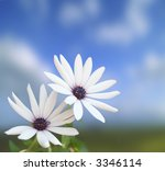 two white flowers on a blue sky ... | Shutterstock . vector #3346114