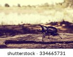 rhinoceros beetle in the... | Shutterstock . vector #334665731