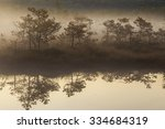 Misty Morning In The Swamp Wit...