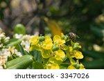 macro of o bee on yellow flower ... | Shutterstock . vector #3347026