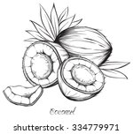 coconut. hand drawn sketches... | Shutterstock .eps vector #334779971