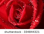 Red Rose And Water Drops Close...