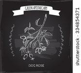rosa canina aka dog rose sketch ... | Shutterstock .eps vector #334854371