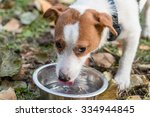 Dog Drinking Water From Bowl....