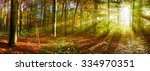 Forest Panorama With Sun Rays