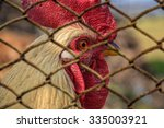 Small photo of Caged rooster, Unfree range range, Farm animal in cage