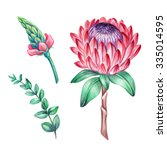 protea flower  green leaves ... | Shutterstock . vector #335014595