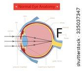 normal eye anatomy. | Shutterstock .eps vector #335037347