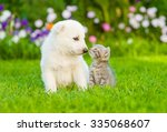 Stock photo kitten kissing white swiss shepherd s puppy on green grass 335068607