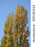 autumnal tree and blue sky on a ... | Shutterstock . vector #335182415