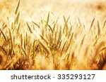 golden wheat field and sunny day | Shutterstock . vector #335293127