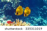 Yellow Masked Butterflyfish ...