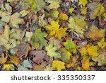 autumn fallen leaves autumn... | Shutterstock . vector #335350337