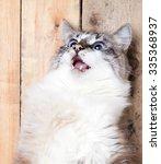 Portrait Surprised Cat