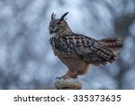 The Eurasian Eagle Owl  Bubo...