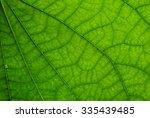 Leaf Texture. Green Leaf