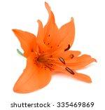 Beautiful Orange Lily Flower...
