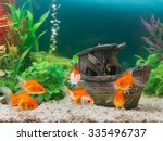 Goldfish In Freshwater Aquariu...