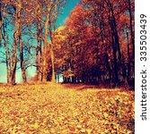 yellow orange autumn forest | Shutterstock . vector #335503439