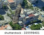 Small photo of The American vultures (Cathartidae Lafresnaye) soars over Havana Cuba. Birds eye view over city of Havana,Cuba. Aerial view