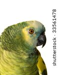 Small photo of Amazon Blue Fronted, Amazona aestiva; Bolivia, Brazil, Paraguay, Argentina, Amazon; isolated on white