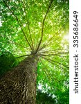 big tree with green leaves  sun ...   Shutterstock . vector #335686649