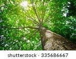 Big Tree With Green Leaves  Su...
