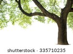 Tall Trees Isolated White Background - Fine Art prints