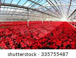 Field Of Beautiful Red...