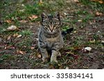 cute kitten outdoors | Shutterstock . vector #335834141