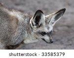 bat eared fox with large ears... | Shutterstock . vector #33585379