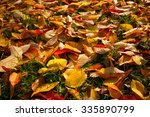 Autumn Leaves Leaves Color...
