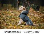 terrier dog in a raincoat in...   Shutterstock . vector #335948489
