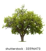 apple tree isolated on a white... | Shutterstock . vector #33596473