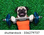 Stock photo pug dog exercising sport with dumbbell bar in the park lying on grass trying very hard 336279737