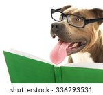 Stock photo cute dog in eyeglasses with book isolated on white 336293531